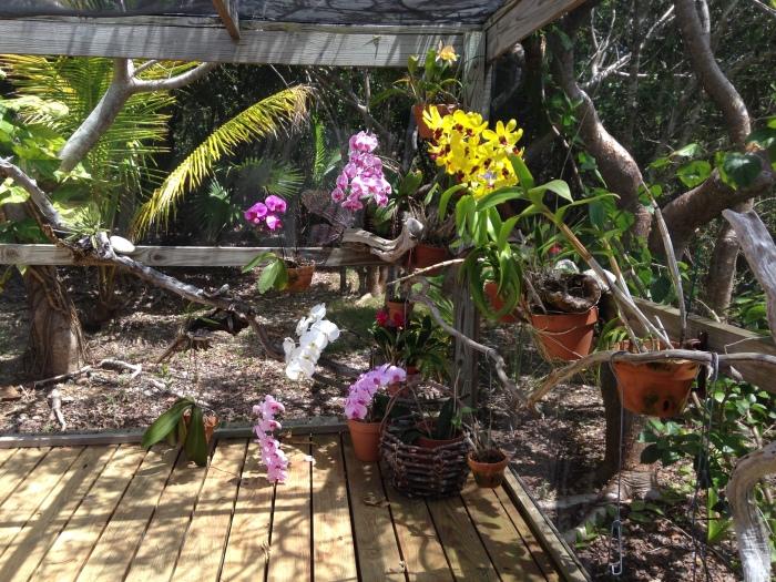 Our Plants