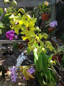 Orchids on the Bungalow
